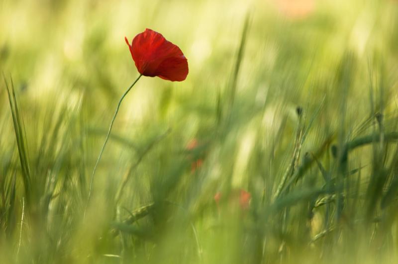 field of... battle - tiny sensation - Tiny sensation: flower macro photography by Nuria Blanco