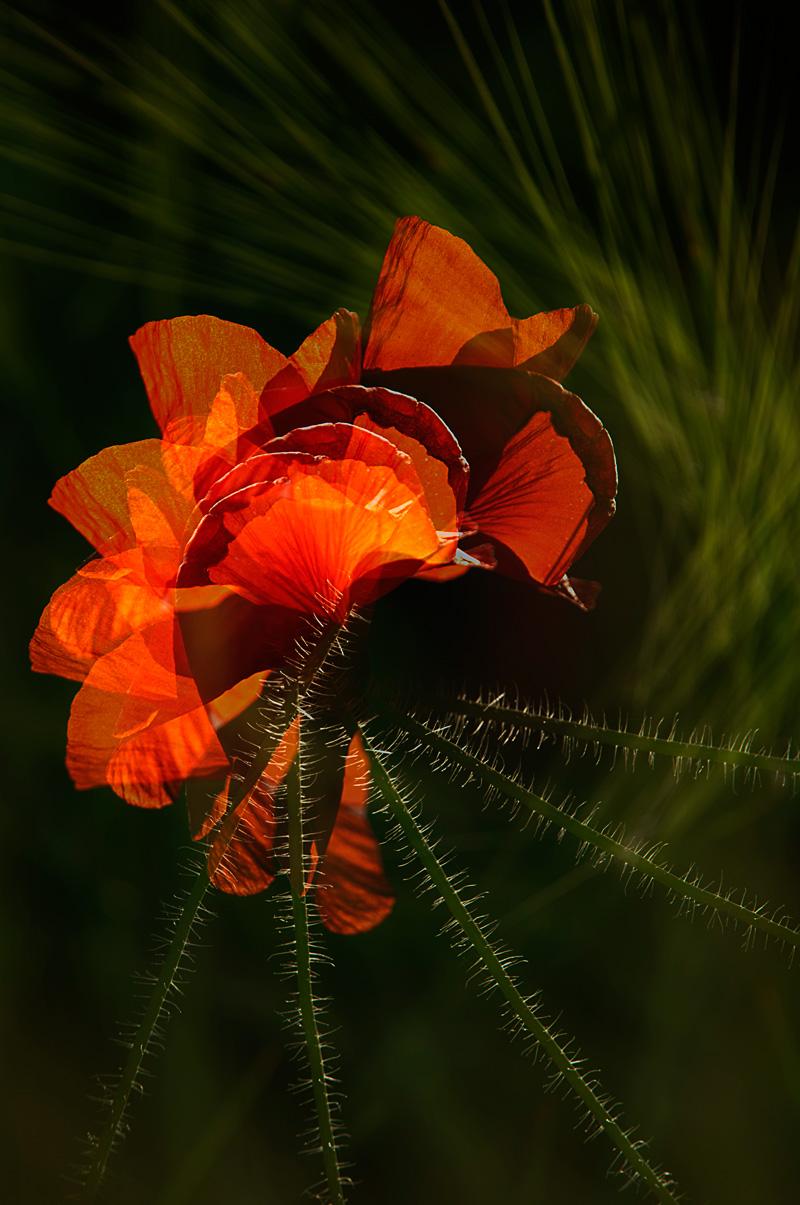 faralaes - personal insight - Nuria Blanco. Heredad Segura Viudas fine art photography . Wild nature in  Spain.Vines