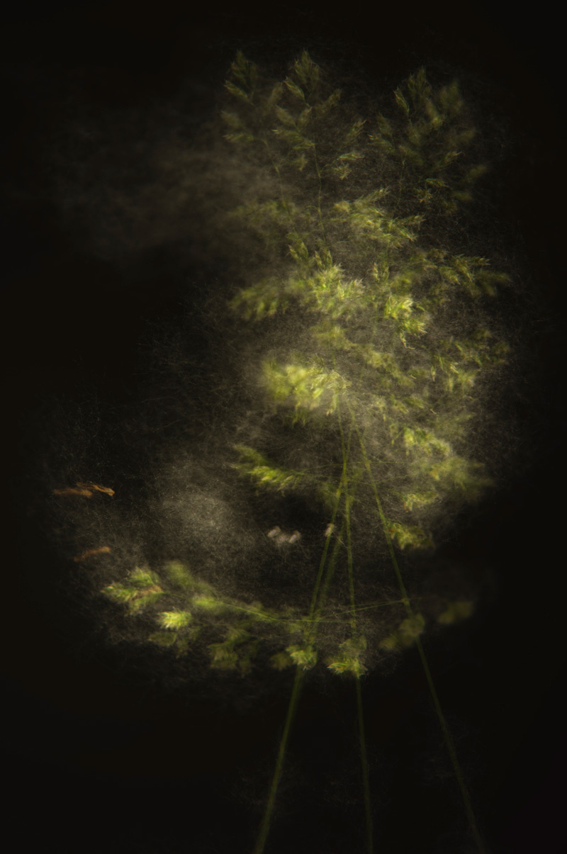 gone with the wind - personal insight - Nuria Blanco. Heredad Segura Viudas fine art photography . Wild nature in  Spain.Vines