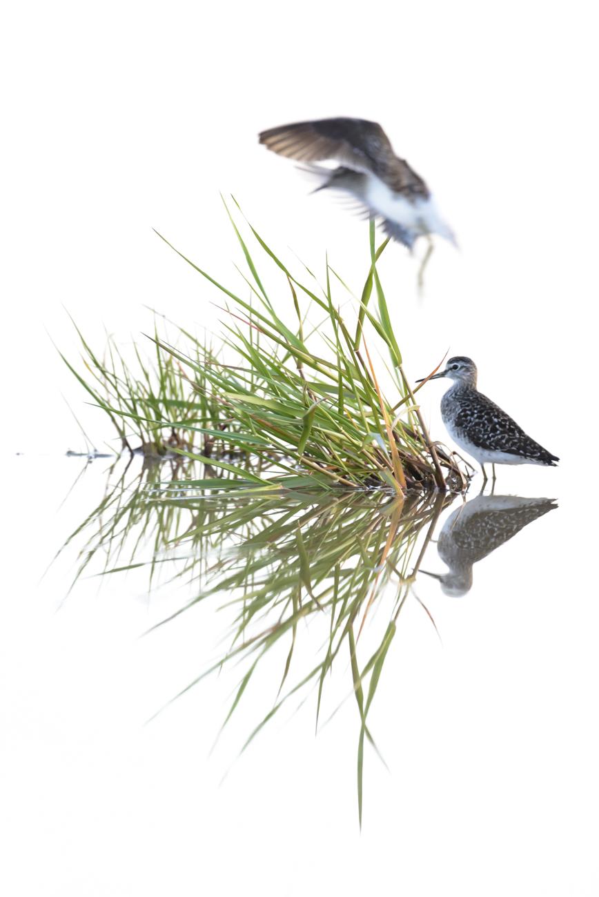 Seres alados - Pablo Bou, Fotografía de Naturaleza y Estudio