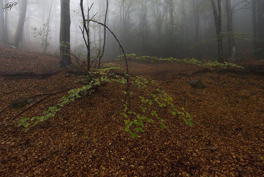 hogar de duendes - Pablo Bou, Fotografía de Naturaleza y Estudio
