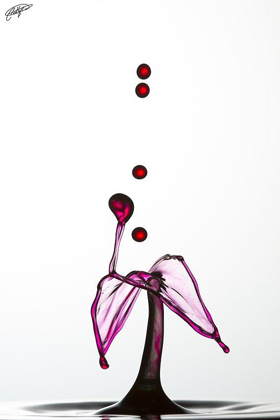caprichos - Pablo Bou, Fotografía de Naturaleza y Estudio