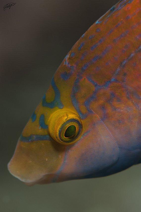 en el azul - Pablo Bou, Fotografía de Naturaleza y Estudio
