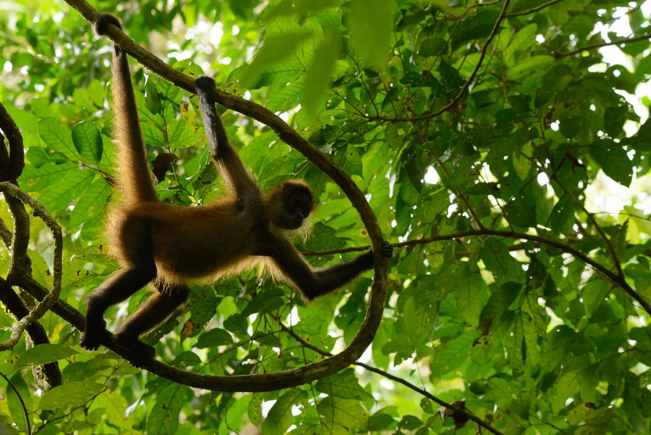 Pura Vida (Costa Rica) - Pablo Bou, Fotografía de Naturaleza y Estudio