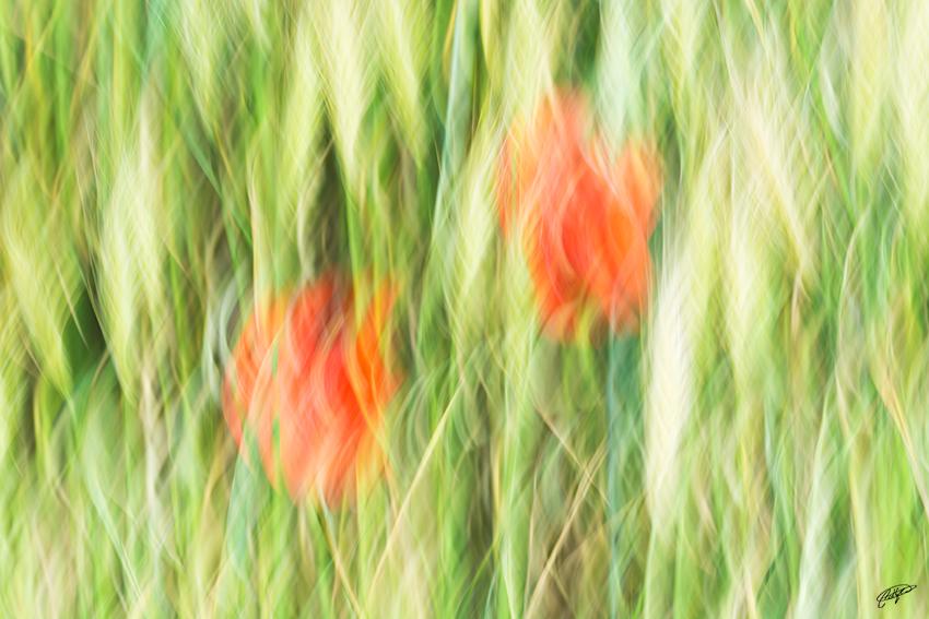 imagina... - Pablo Bou, Fotografía de Naturaleza y Estudio