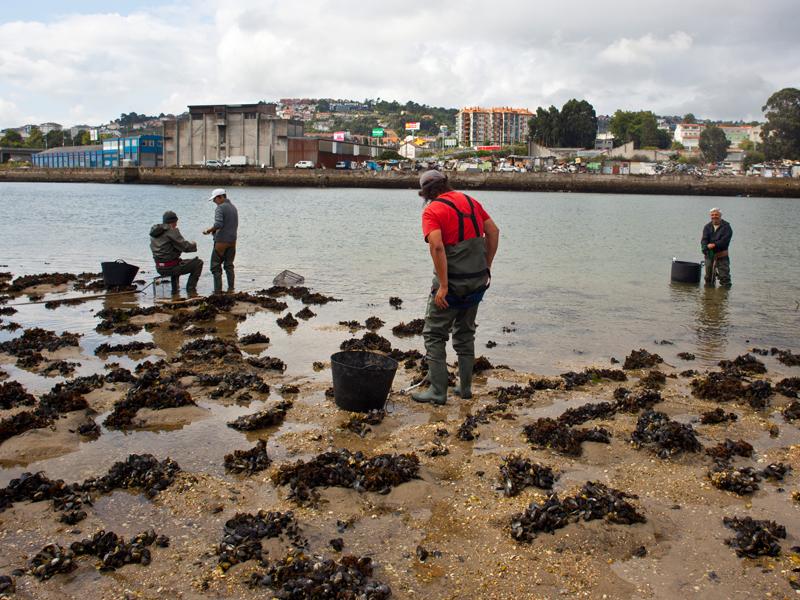 Mariscando na Ría - Fotógarfos Cambre, Pastor fotógrafos, fotografía naturaleza, fotografía Galicia