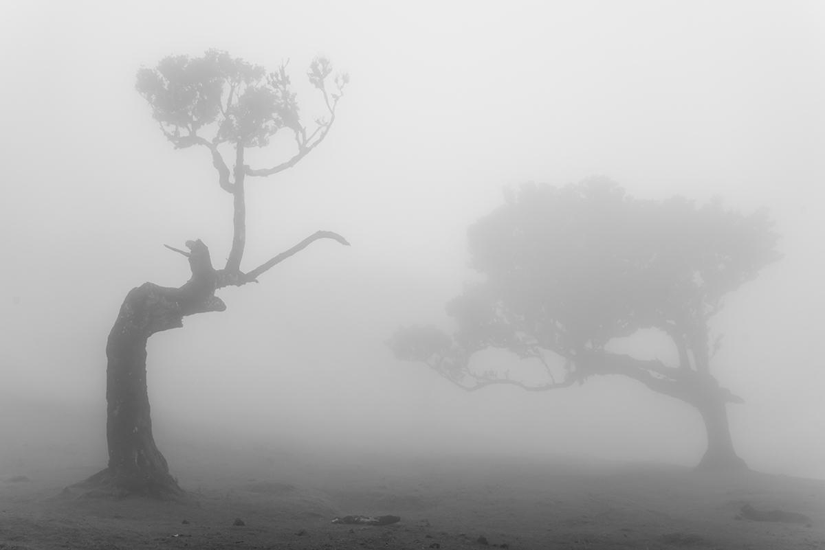 El bosque de los sueños - Pedro Javier Pascual , PHOTOGRAPHIC ARTIST