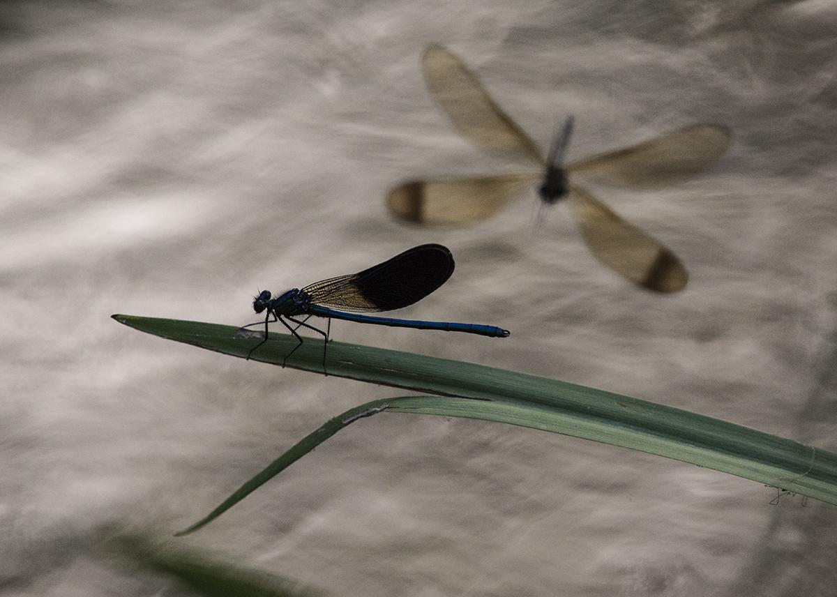 Junto a tu orilla - Pedro Javier Pascual , PHOTOGRAPHIC ARTIST