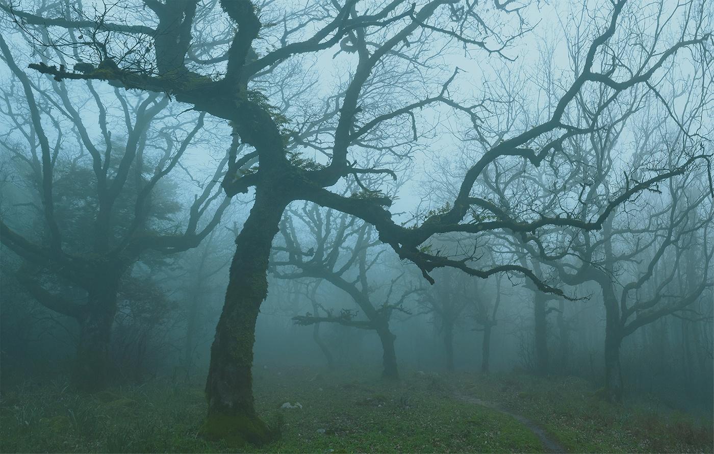 Los Alcornocales - Phantasmagoric - Peter Manschot Al Andalus Photo Tour, Landscape photography photos prints workshops Andalusia Spain
