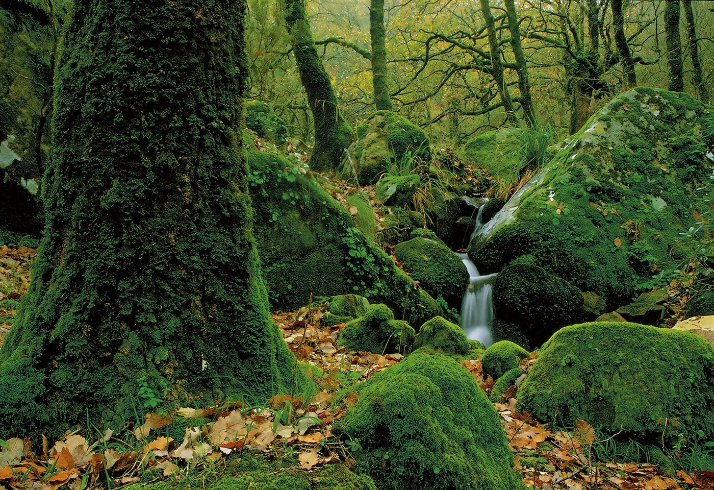 Los Alcornocales - Waldeinsamkeit - Peter Manschot Al Andalus Photo Tour, Landscape photography photos prints workshops Andalusia Spain