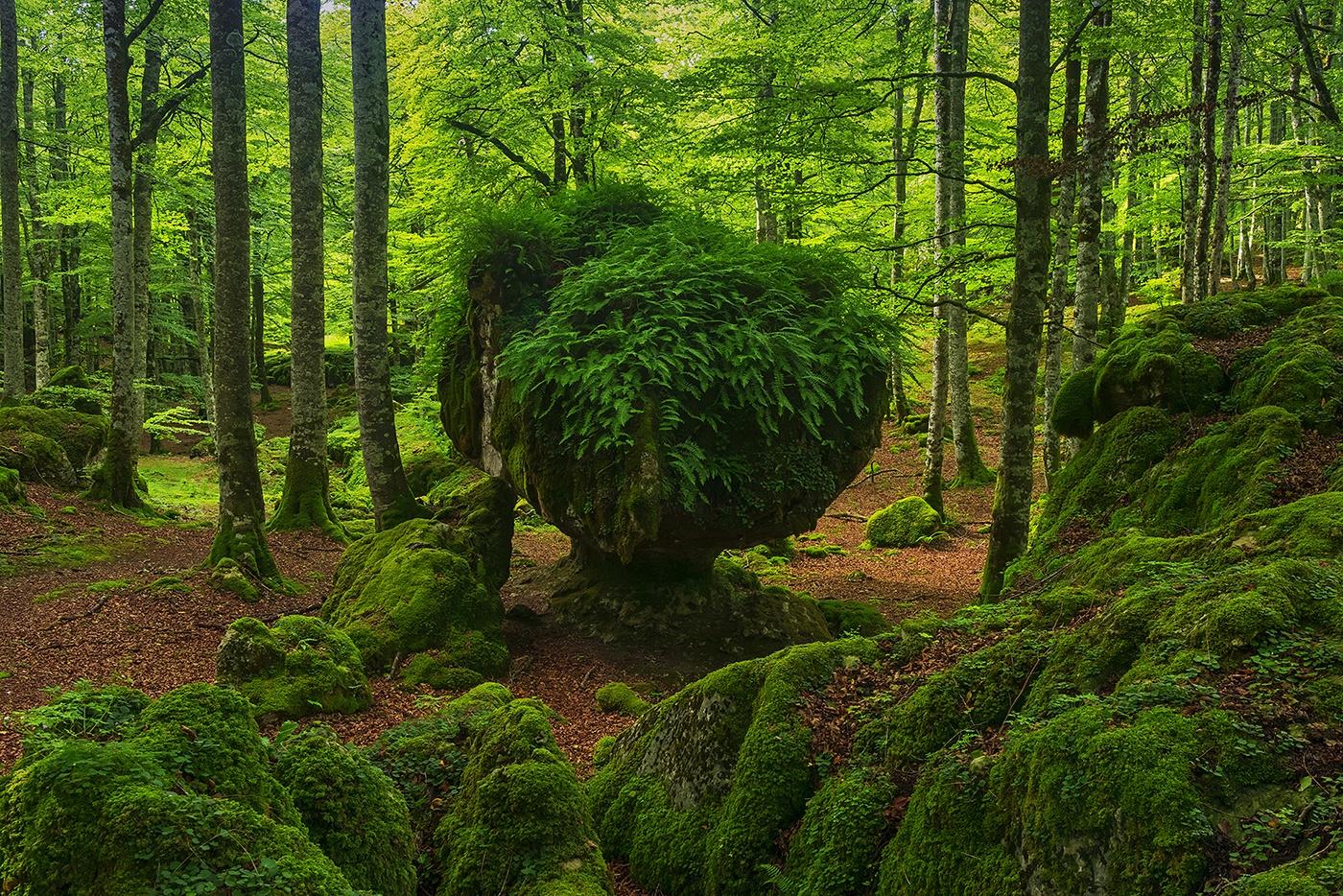 Urbasa - Waldeinsamkeit - Peter Manschot Al Andalus Photo Tour, Landscape photography photos prints workshops Andalusia Spain