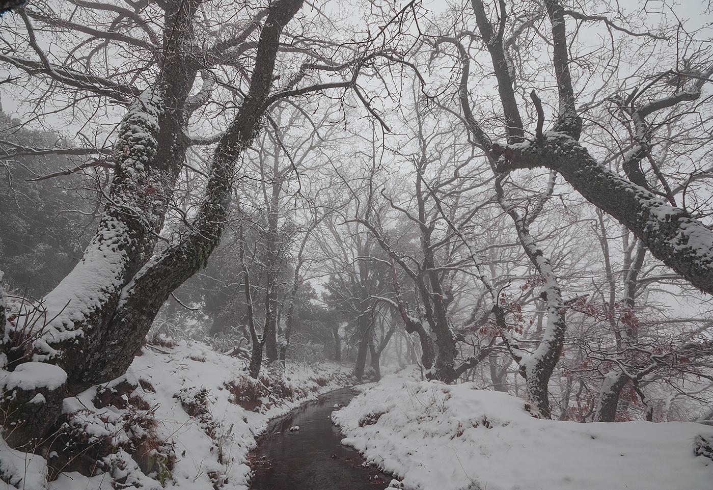 Sierra Nevada - Waldeinsamkeit - Peter Manschot Al Andalus Photo Tour, Landscape photography photos prints workshops Andalusia Spain