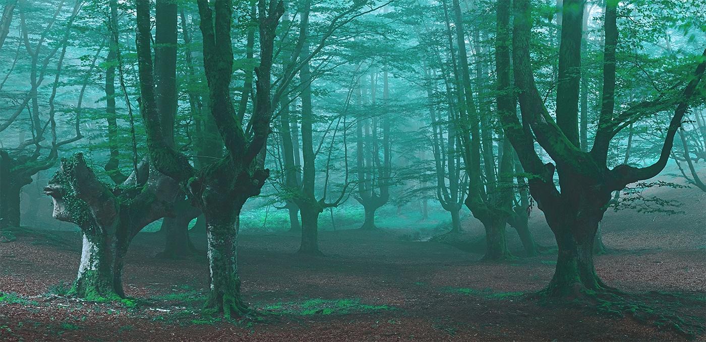 Gorbeia - Waldeinsamkeit - Peter Manschot Al Andalus Photo Tour, Landscape photography photos prints workshops Andalusia Spain