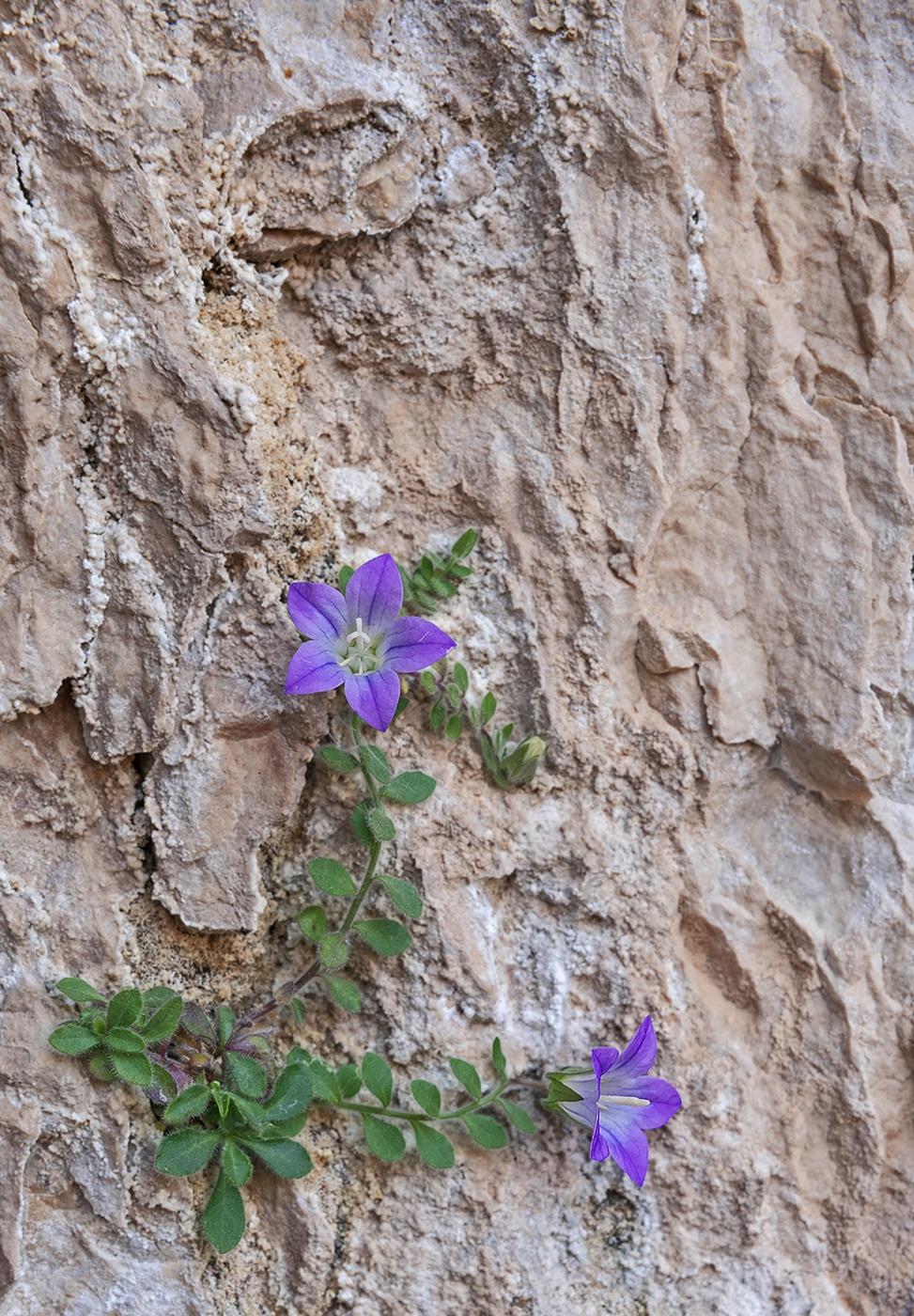 Sierra de Castril - Natural resilience - Peter Manschot Al Andalus Photo Tour, Landscape photography photos prints workshops Andalusia Spain