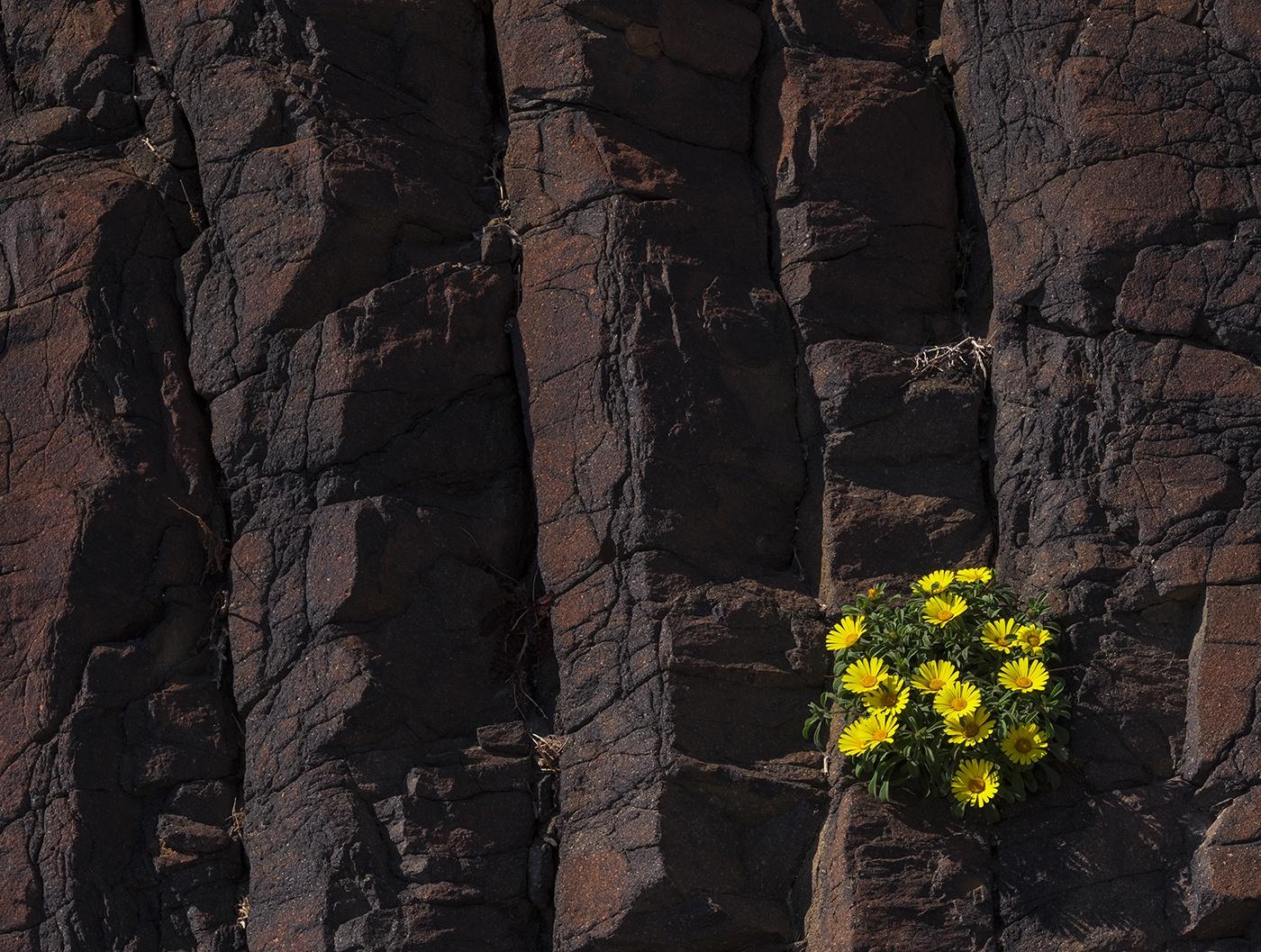 Cabo de Gata - Natural resilience - Peter Manschot Al Andalus Photo Tour, Landscape photography photos prints workshops Andalusia Spain