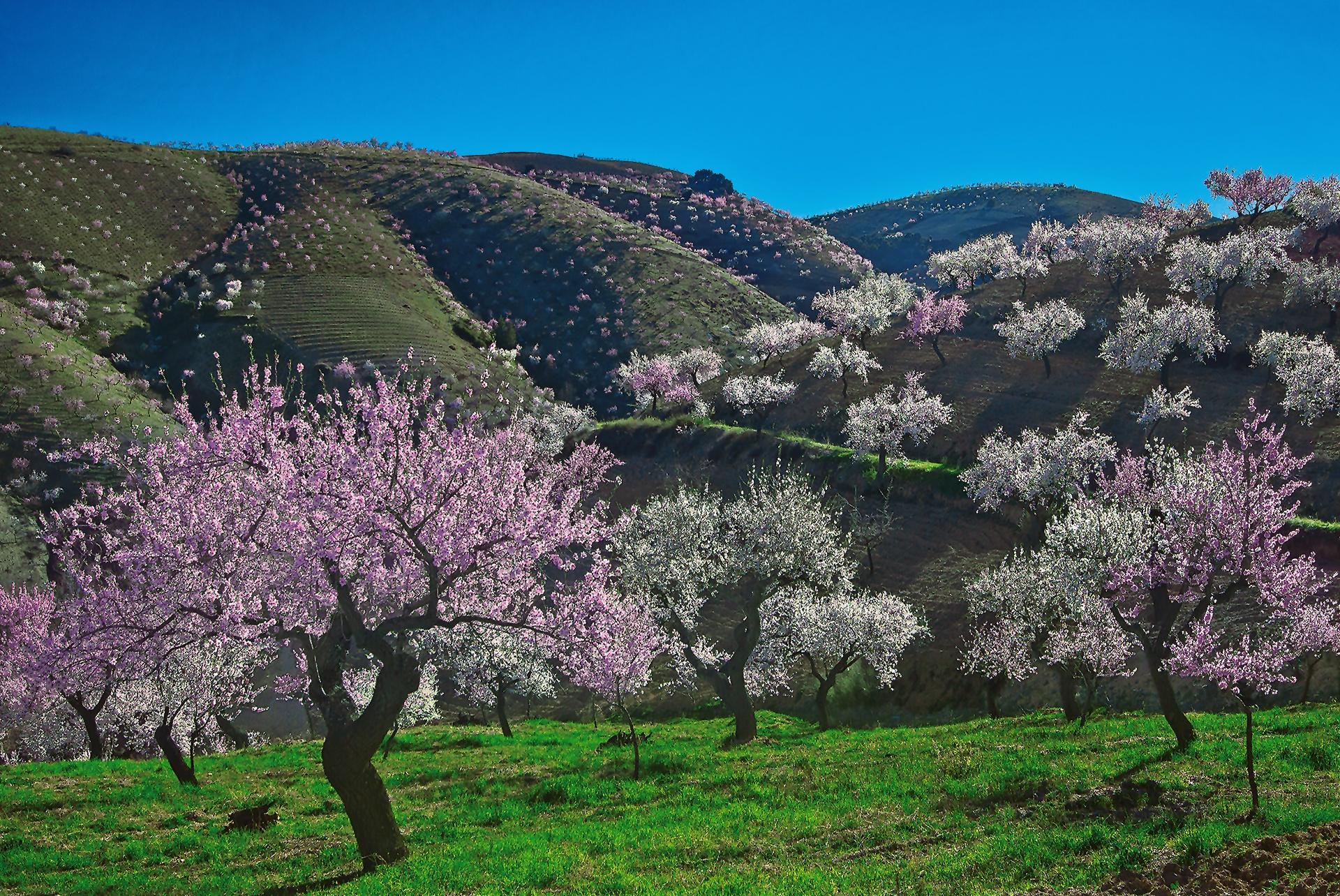 Las Alpujarras - Undulations - Peter Manschot Al Andalus Photo Tour, Landscape photography photos prints workshops Andalusia Spain