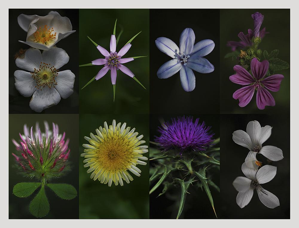 INICIO -  Photanica,                              Fotografía de Flora y Vegetación    Rutas por la naturaleza