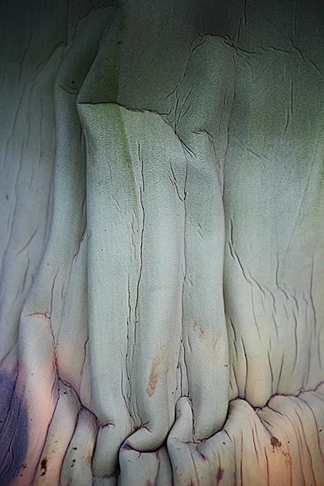 NUCLEO -  Photanica,                              Fotografía de Flora y Vegetación    Rutas por la naturaleza