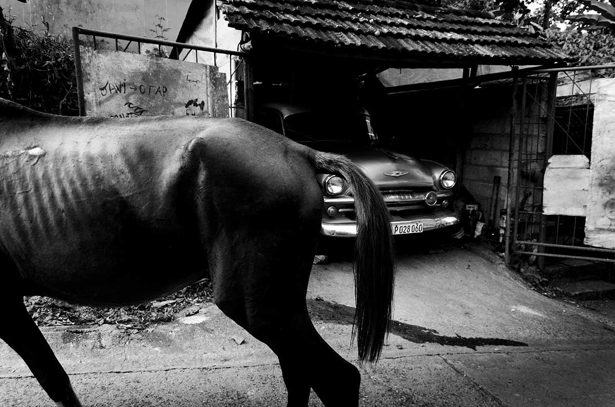 an old horse withour head in cuba - Anonymous Island - Anonymous Island - Cuban Photo essay of Louis Alarcon about Cuba and its mistery