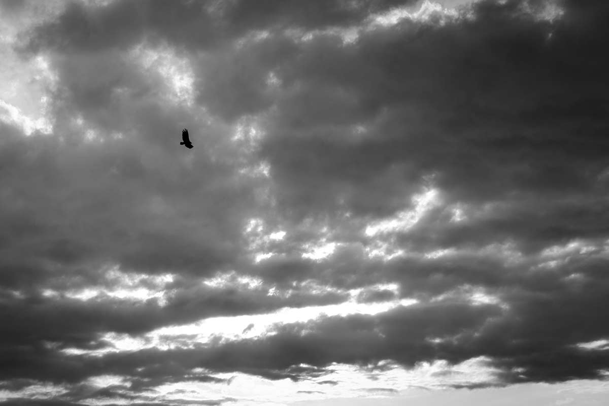 loney vulture in the clouds - Anonymous Island - Anonymous Island - Cuban Photo essay of Louis Alarcon about Cuba and its mistery