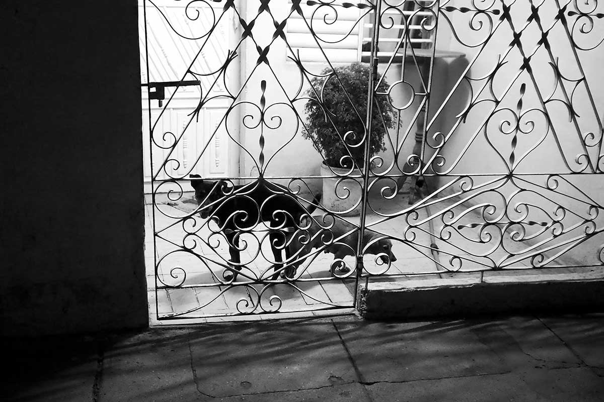 two cuban dogs in a jail - Anonymous Island - Anonymous Island - Cuban Photo essay of Louis Alarcon about Cuba and its mistery