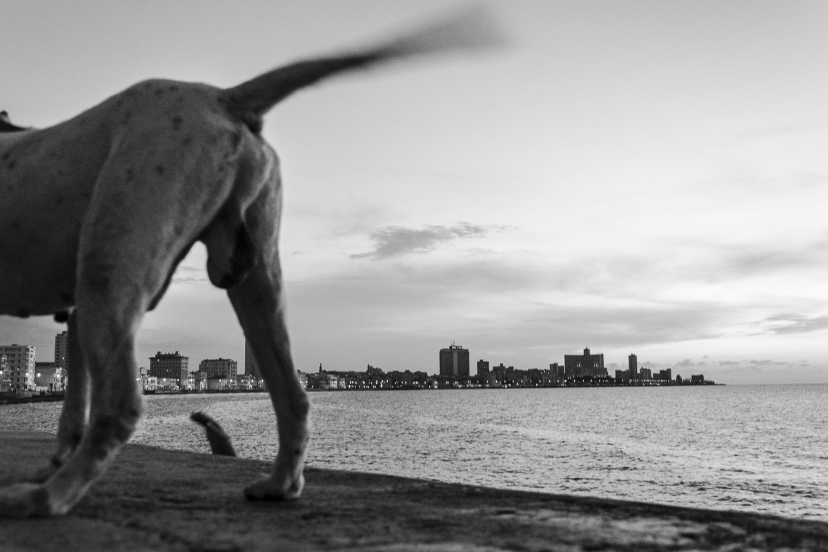 half dog in havana. cuban picture - Jumpers - Last jump in Havana - Cuban Photography essay about the last jumpers in Malecon.