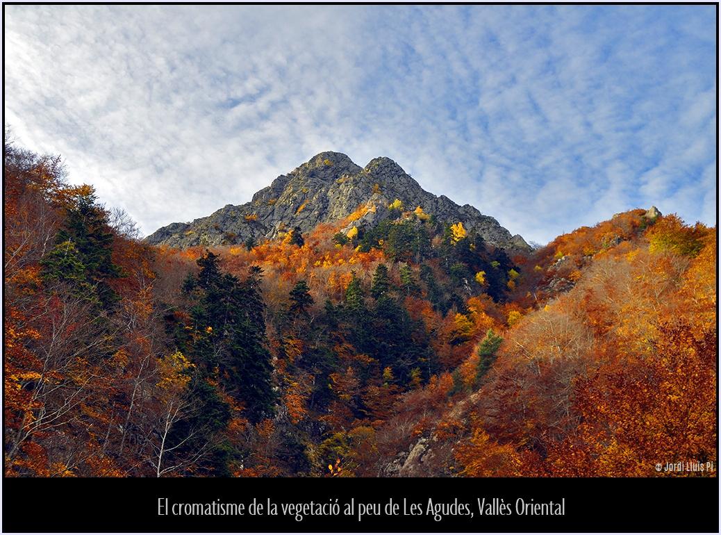 Tardor al Montseny - Tardor al Montseny