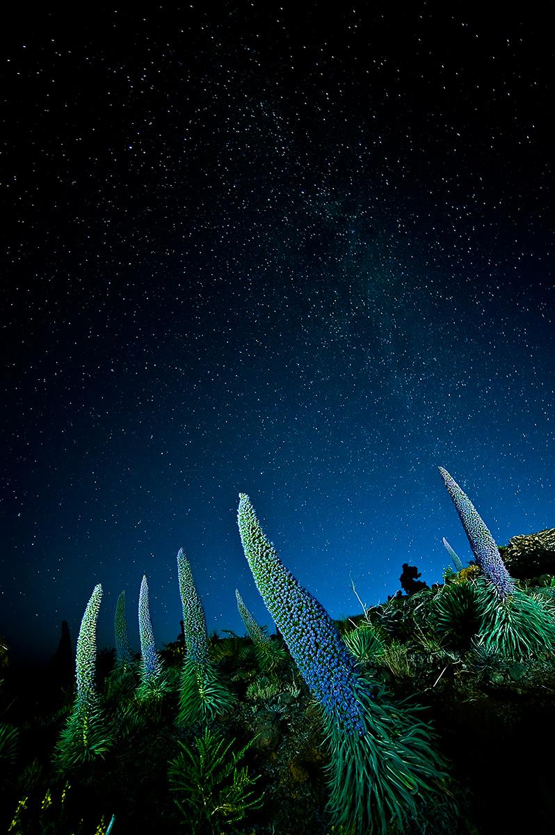 Tajinastes - Juanjo Sierra - Portfolio Natural, Fotografía de Naturaleza de Autor