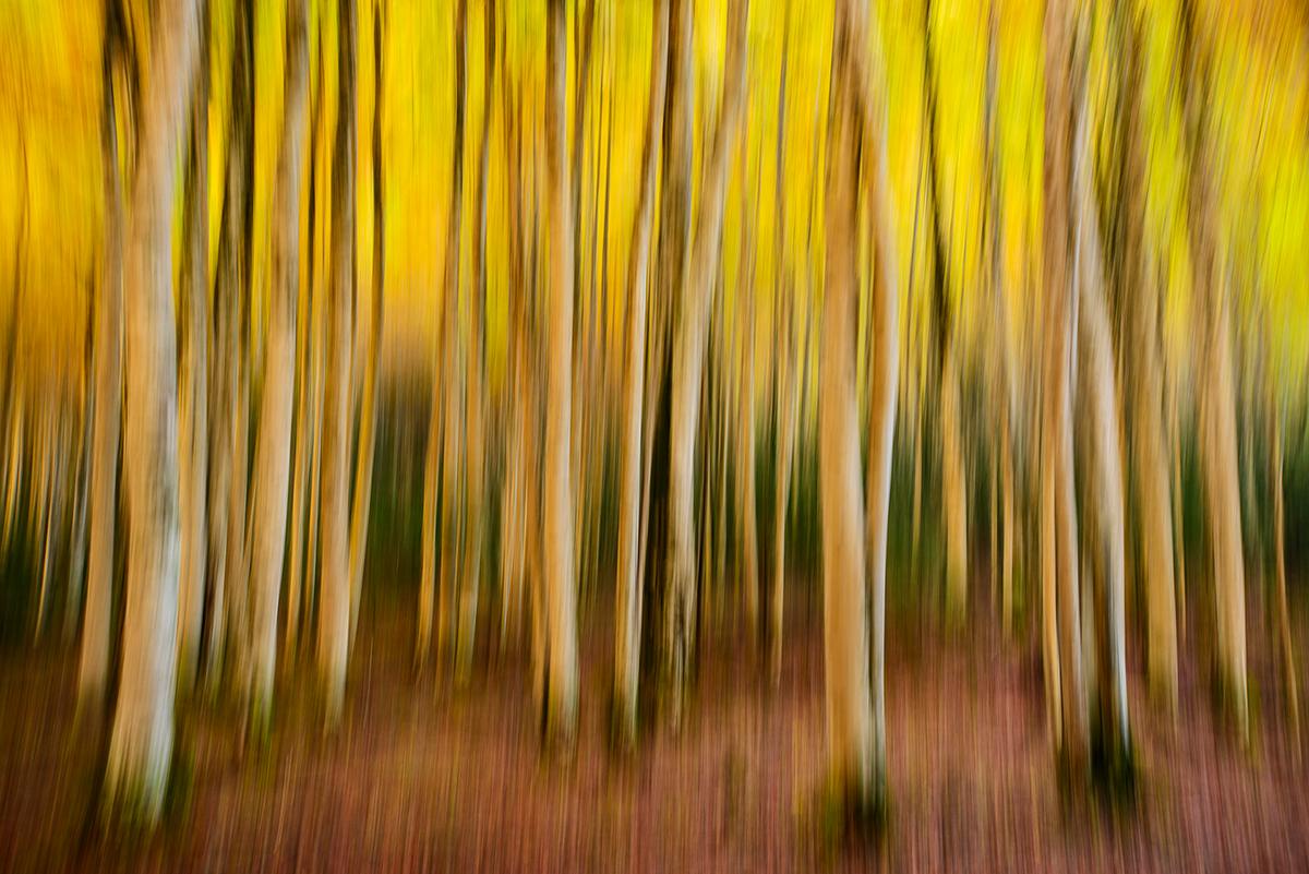 Magic forest - Juanjo Sierra - Portfolio Natural, Fotografía de Naturaleza de Autor