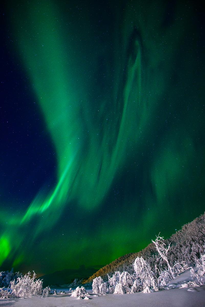 Aurora sobre bosque nevado - Juanjo Sierra - Portfolio Natural, Fotografía de Naturaleza de Autor