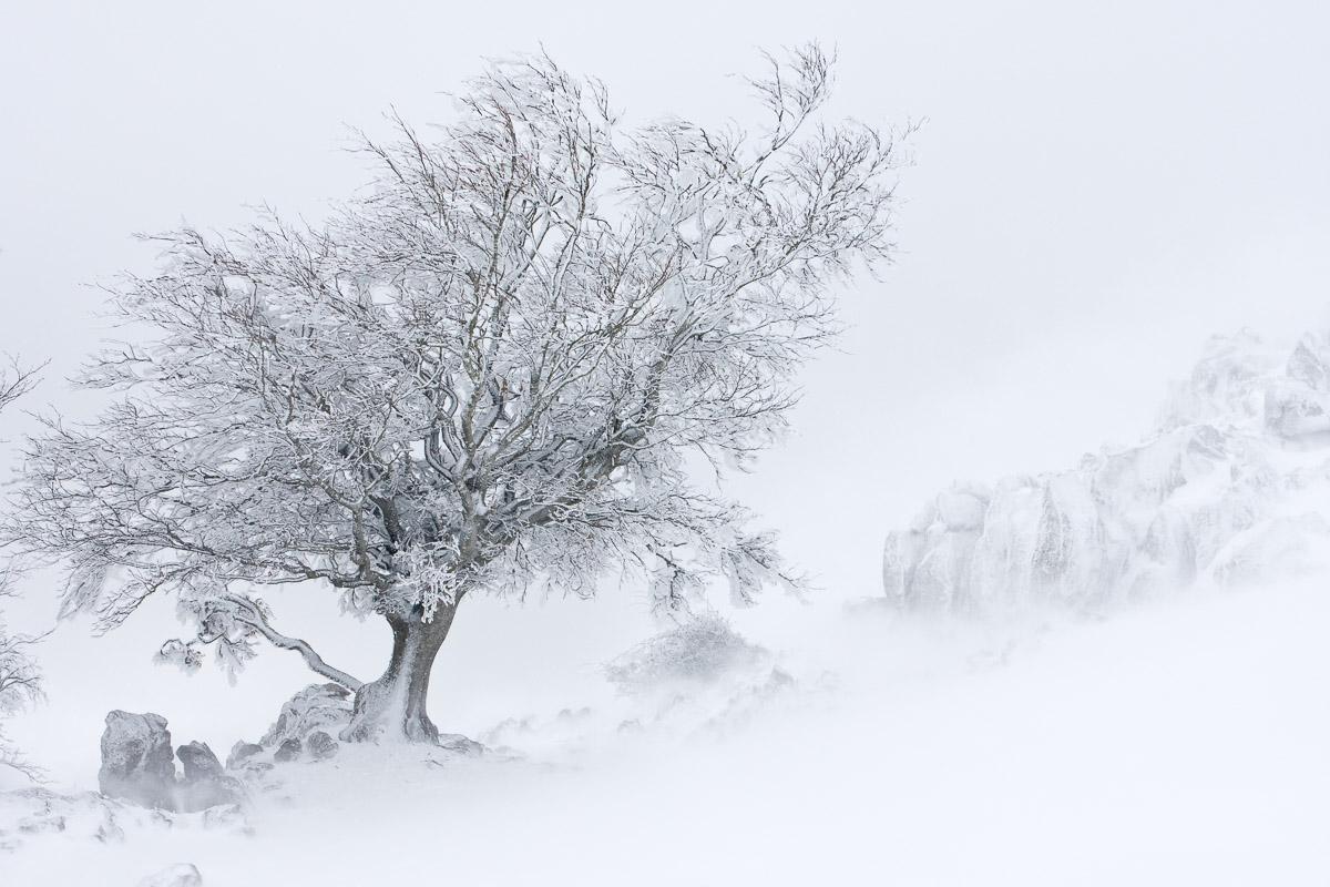 Natura - Portfolio Natural, Fotografía de Naturaleza de Autor