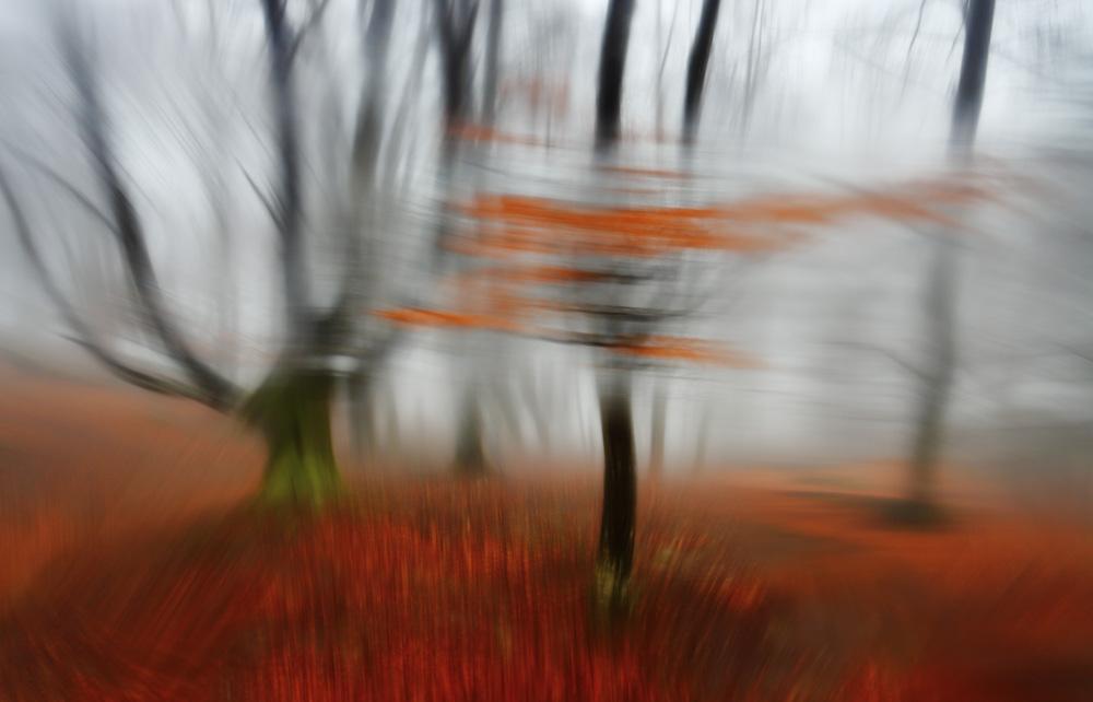 Abstract - Exposición fotográfica ABSTRACT