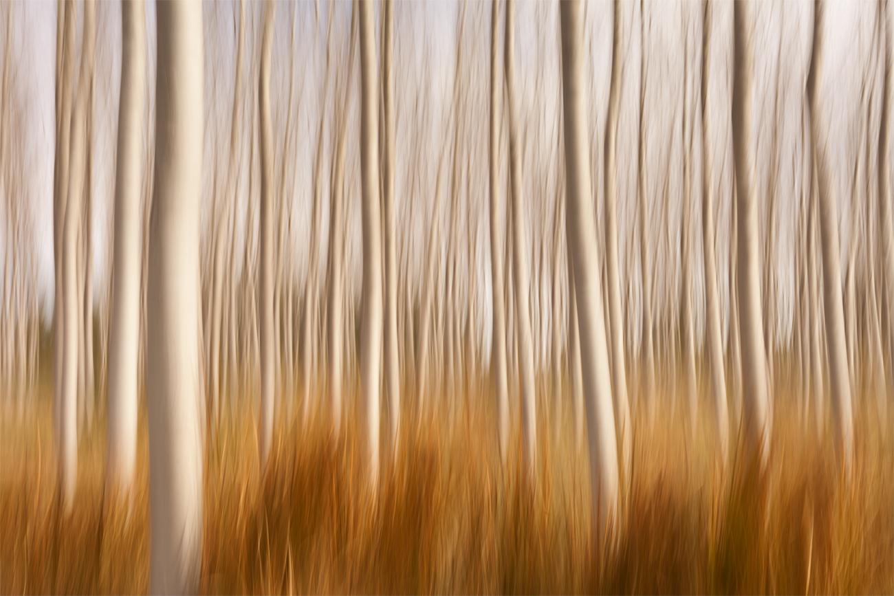 Spring Impressions in a Poplar Field - David Frutos Egea - David Frutos Egea - Portfolio Natural