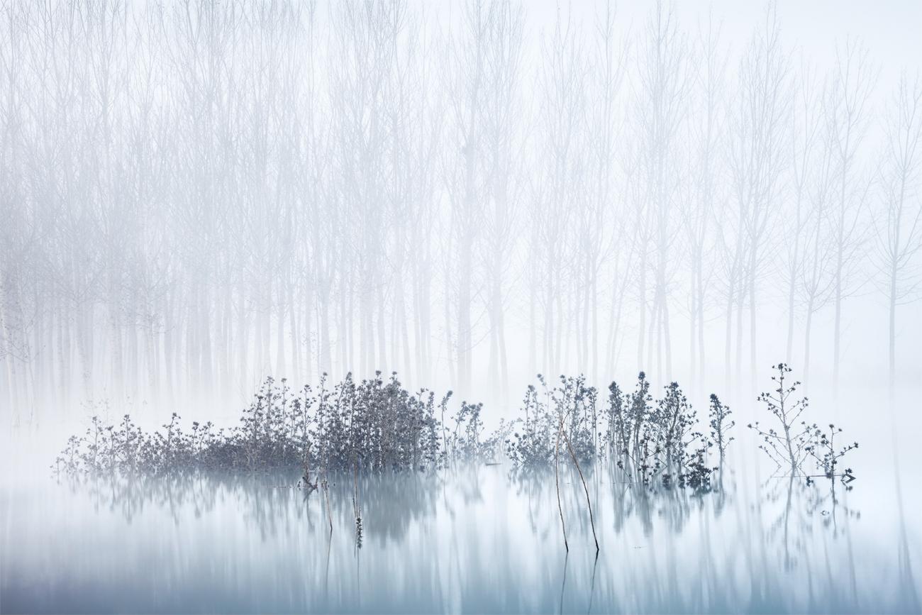 Cold & Foggy Morning in the Swamp - David Frutos Egea - David Frutos Egea - Portfolio Natural
