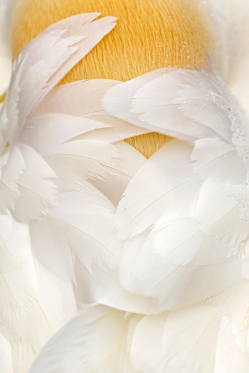 Pictio - Portfolio Natural, Fotografía de Naturaleza de Autor