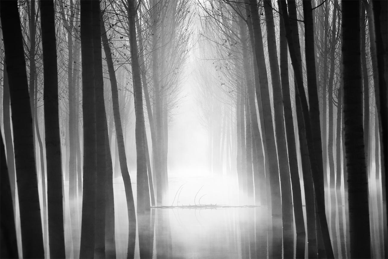 Nessy - David Frutos Egea - David Frutos Egea - Portfolio Natural