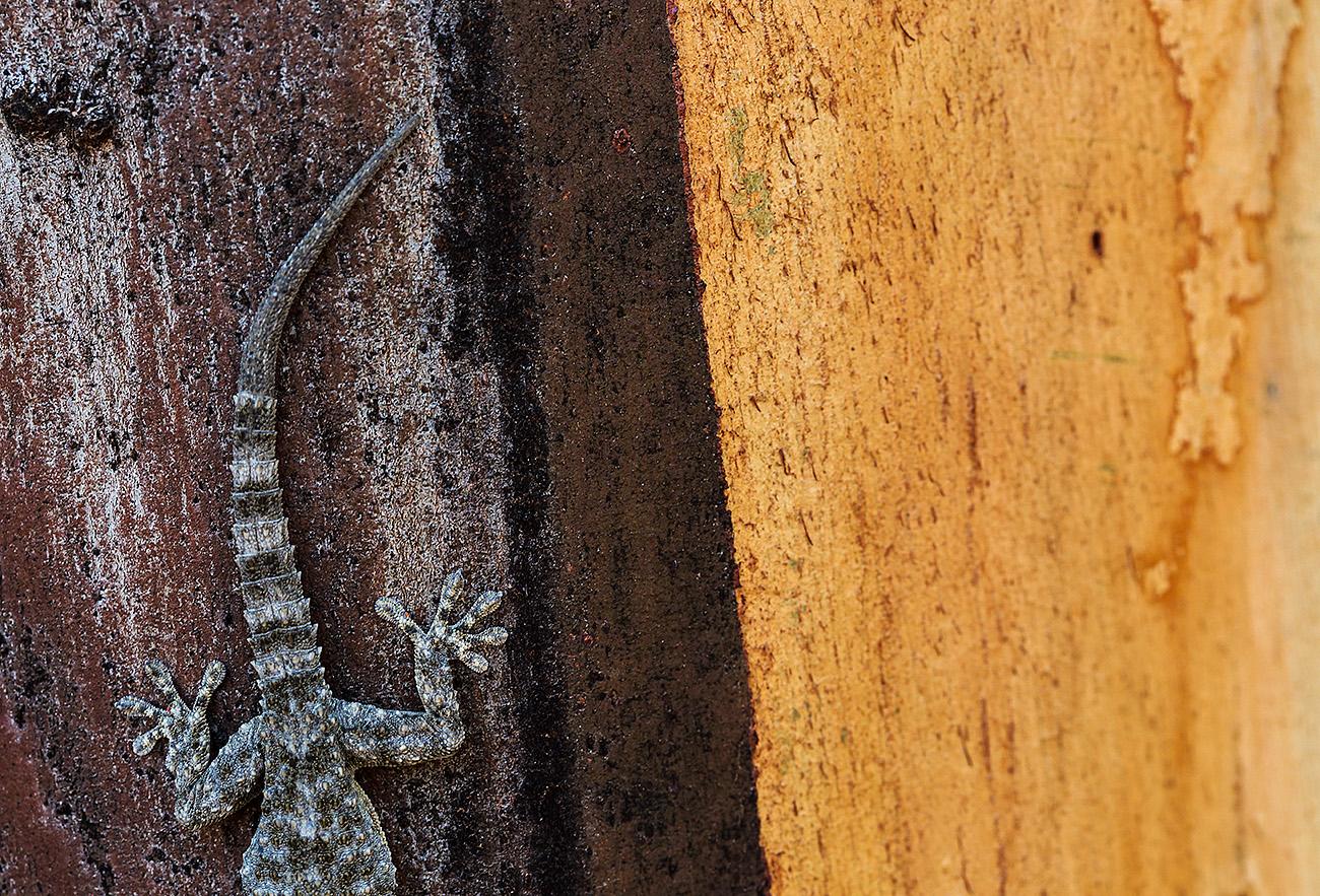 EL GUARDIAN DEL EUCALIPTUS-ALMERIA-ESPAÑA - Fran Rubia - Portfolio Natural, Fotografía de Naturaleza de Autor