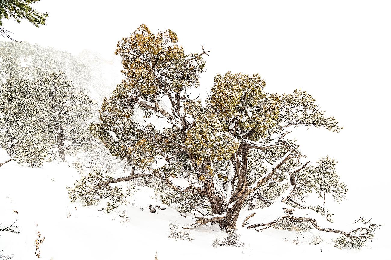 HELP-GRAND CANYON-USA - Fran Rubia - Portfolio Natural, Fotografía de Naturaleza de Autor