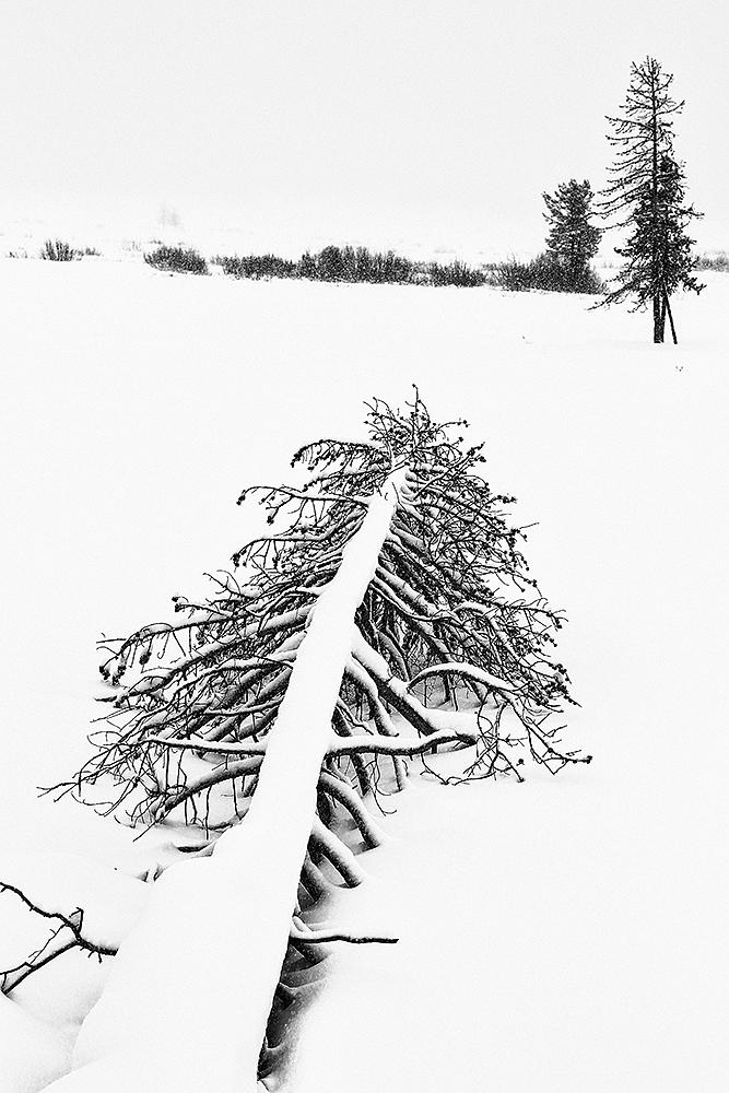 WINTER-YELLOWSTONE-USA - Fran Rubia - Portfolio Natural, Fotografía de Naturaleza de Autor
