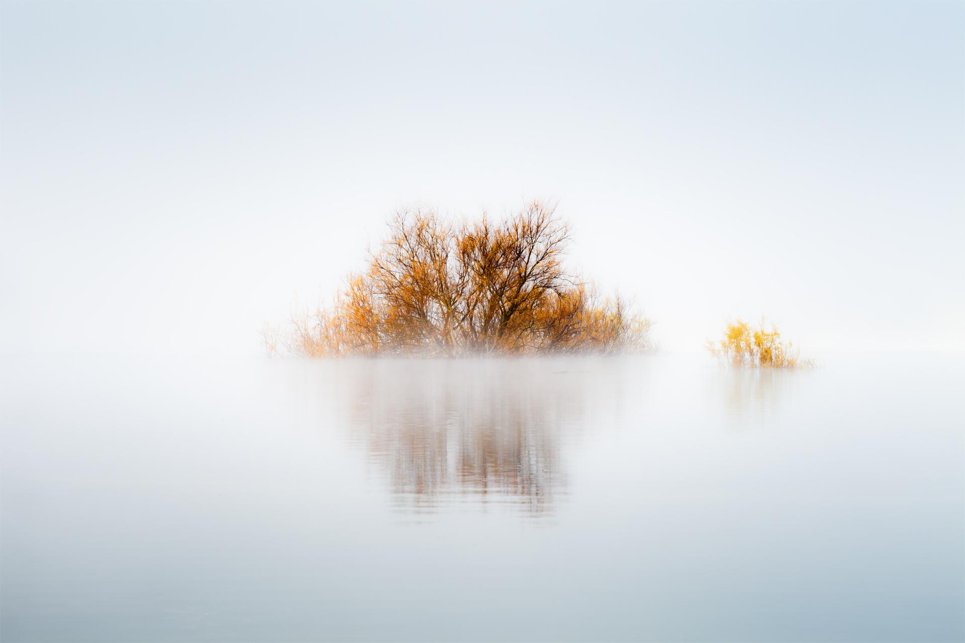 The Swamp Star - David Frutos Egea - David Frutos Egea - Portfolio Natural