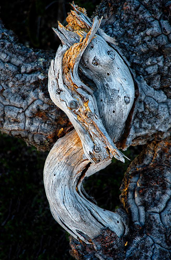 dragon - Daniel Montero - Portfolio Natural, Fotografía de Naturaleza de Autor