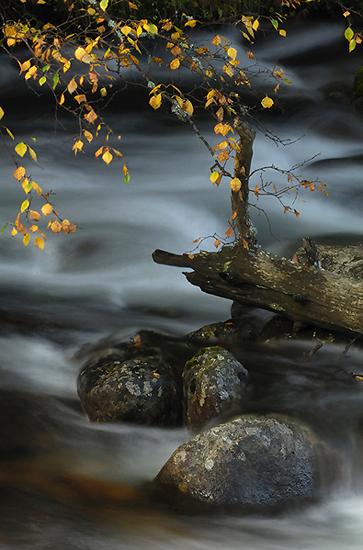Sobre el cauce - Juan Santos - Portfolio Natural, Fotografía de Naturaleza de Autor