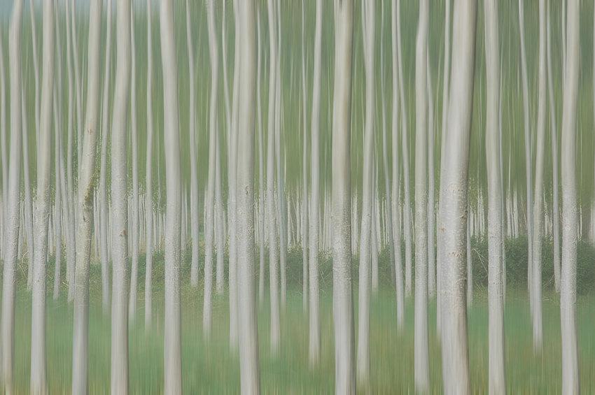 Homenaje a Touluse-Lautrec. Bosque impresionista - Koldo Badillo - Fotografías de naturaleza de Koldo Badillo en Portafolio Natural