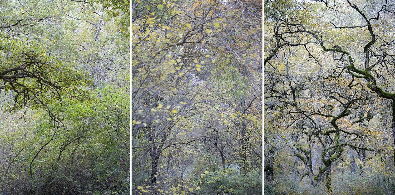 Koldo Badillo - Fotografías de naturaleza de Koldo Badillo en Portafolio Natural