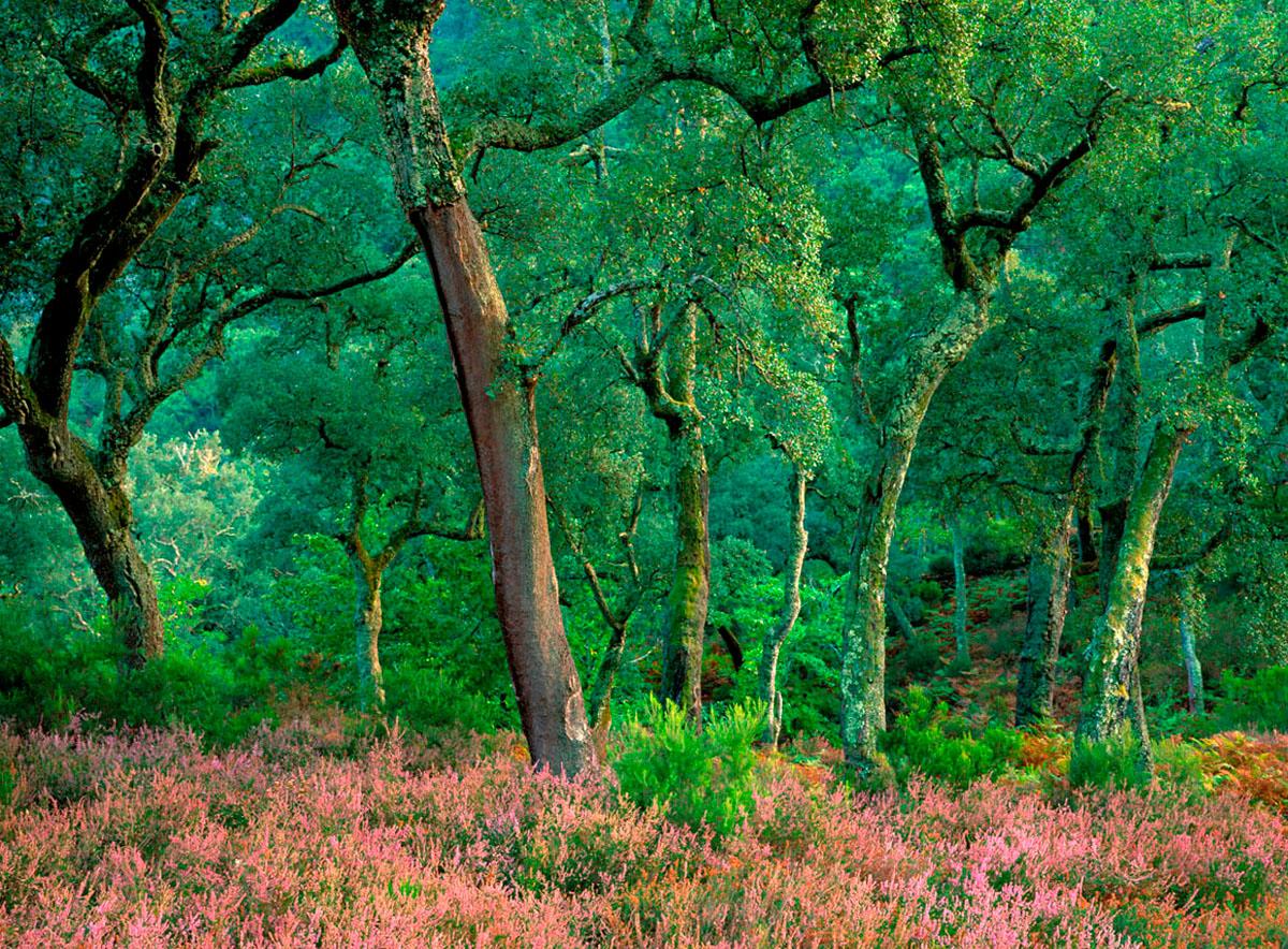 COLECCIÓN  ECOS  +info www.manuellemos .es - Manuel Lemos - Portfolio Natural, Fotografía de Naturaleza de Autor
