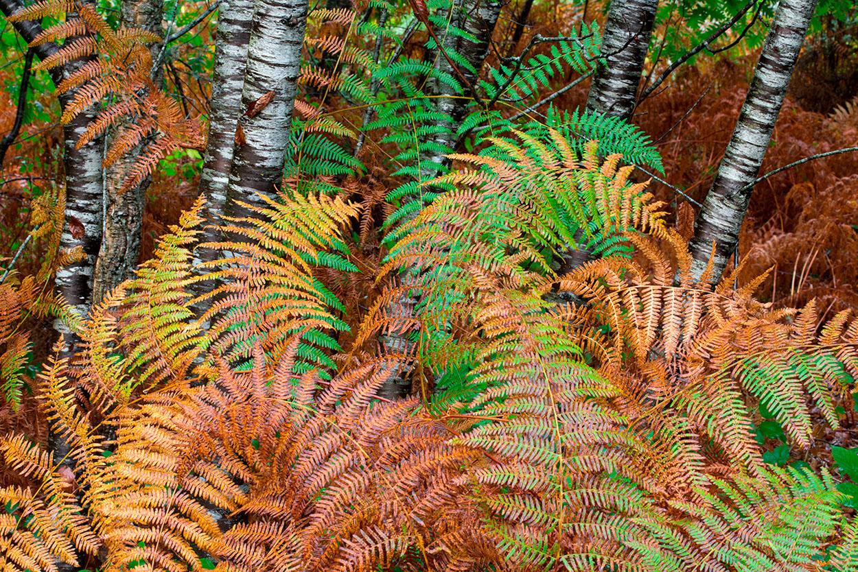 COLECCIÓN  LOS OTOÑOS    +info www.manuellemos .es - Manuel Lemos - Portfolio Natural, Fotografía de Naturaleza de Autor