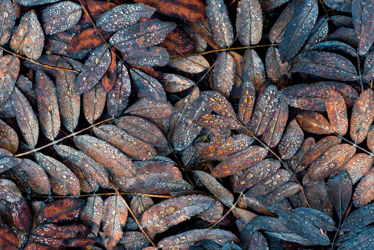 COLECCIÓN  NATUREZAS  +info www.manuellemos .es - Manuel Lemos - Portfolio Natural, Fotografía de Naturaleza de Autor