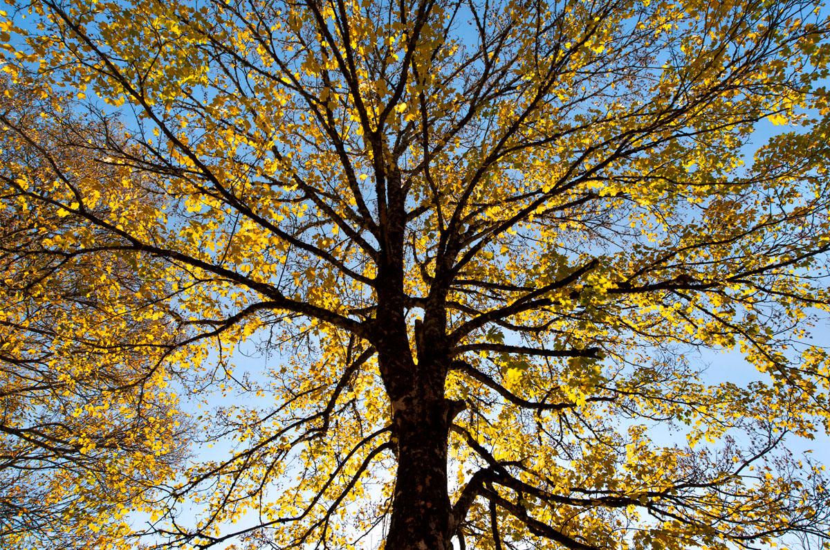 COLECCIÓN  SOY ÁRBOL  +info www.manuellemos .es - Manuel Lemos - Portfolio Natural, Fotografía de Naturaleza de Autor