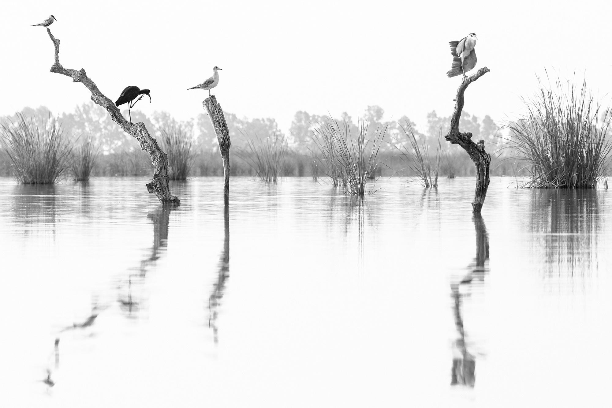 CADA UNO A LO SUYO - Manuel Enrique Gonzalez - Manuel Enrique Gonzalez Carmona - Portfolio Natural