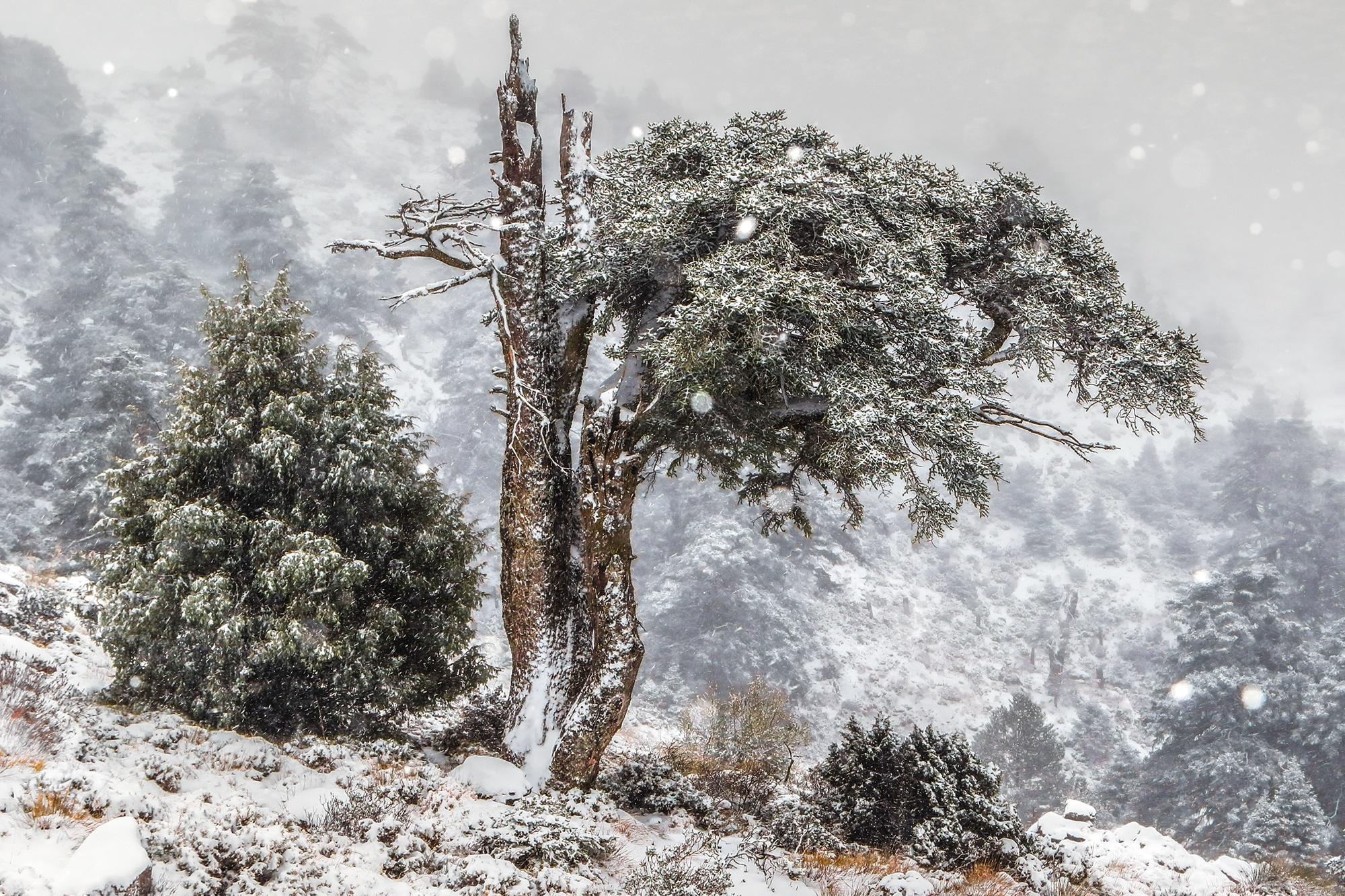 CHRISTMAS TREE - Manuel Enrique Gonzalez - Manuel Enrique Gonzalez Carmona - Portfolio Natural